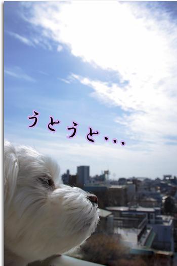 春眠ちゃん1