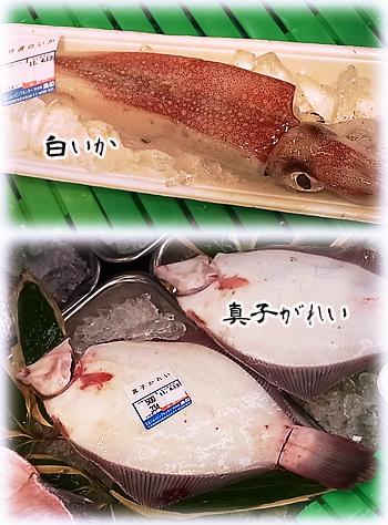 魚たち0413