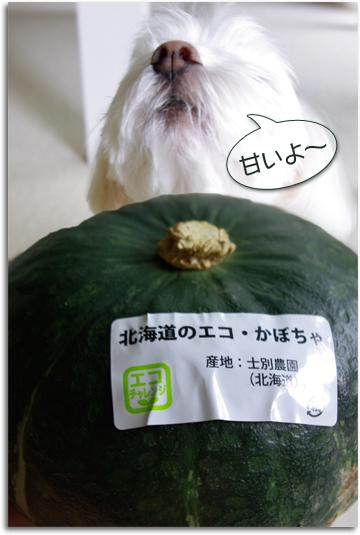 北海道のエコ・かぼちゃ