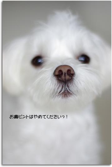 お鼻ちゃん♪