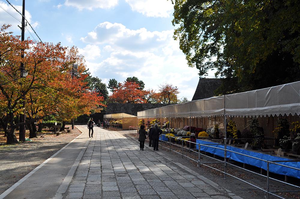 momijiwakayama (17)