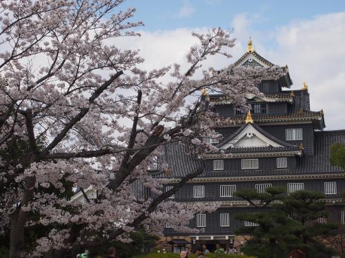 2013岡山城桜