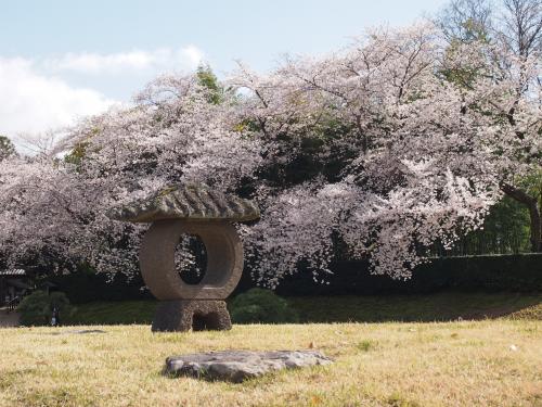 2013後楽園桜3