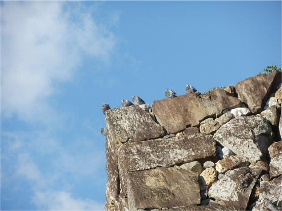 高知城石垣