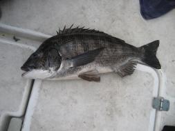 2010年ボート釣果53cm