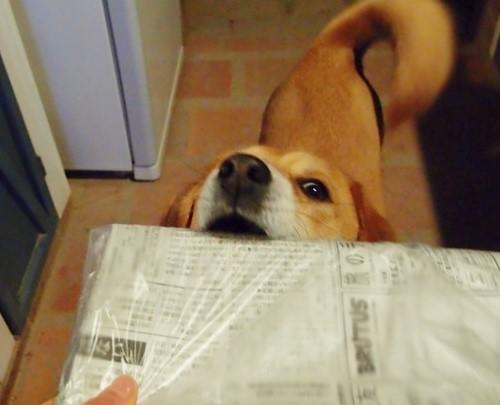 新聞どうぞ