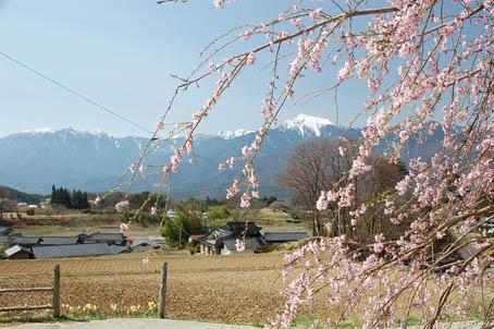 0414八ヶ岳分院桜