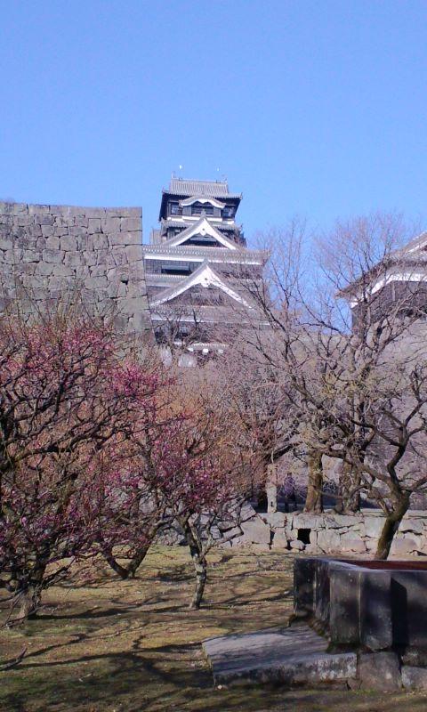 つるちゃんの熊本城