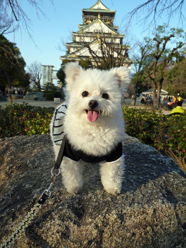 大阪城とアピー
