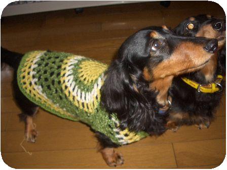 わんこのセーター