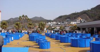 広島若鯉品評会2010 (5)