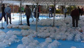 広島若鯉品評会2010 (3)