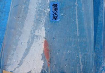 広島若鯉品評会2010 (12)