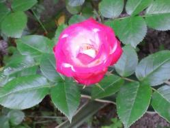 201105241.jpg