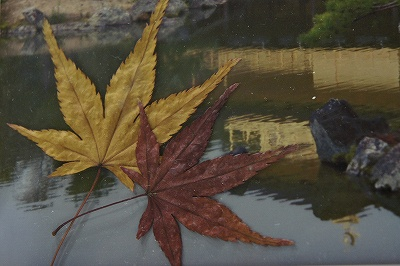 毘沙門天の秋紅葉
