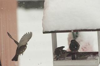 こちゅん雪やどり3