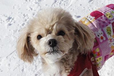 雪の日のお散歩3