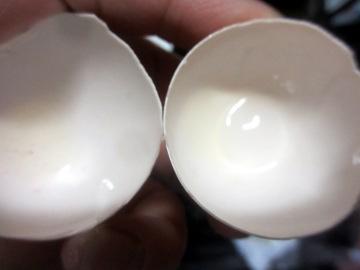 卵の殻の2