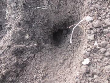 モグラの穴いっぱい
