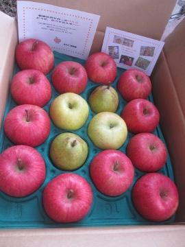 ヨメッコさんちのりんご