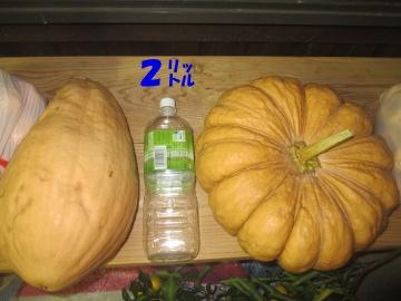 三毛門かぼちゃ2