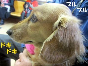 耳の診察2