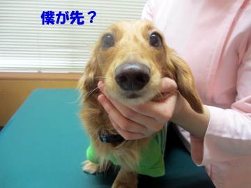 耳の診察3