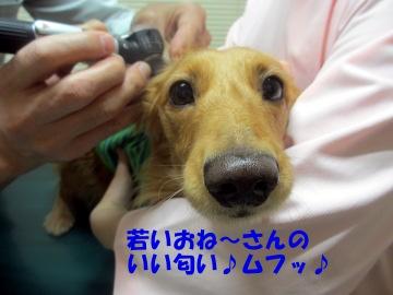 耳の診察4
