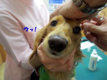 耳の診察6