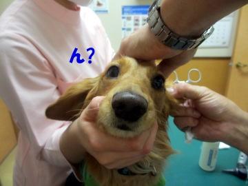 耳の診察7