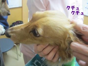耳の診察8