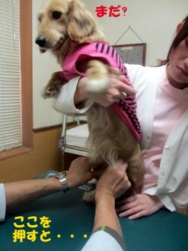 耳の診察11