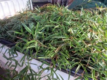 竹いっぱい