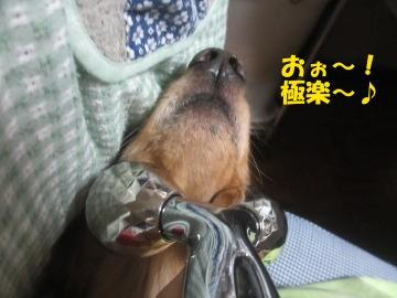 顔コロコロ4