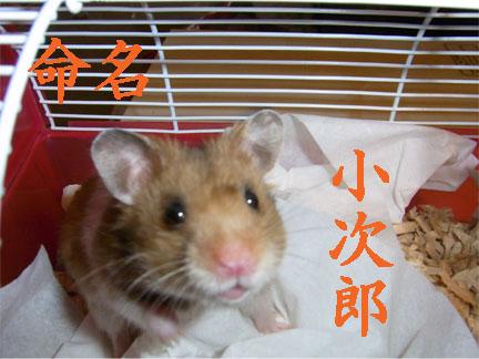 僕、小次郎です。よろちく!