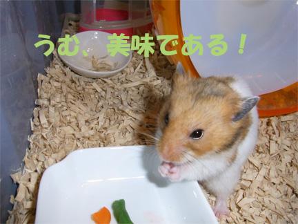 スイカを王者食いだよ~!