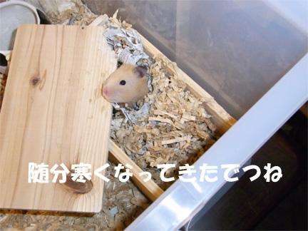 白ちゃん元気だよ~