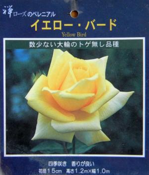 薔薇YB2