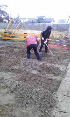 朝から穴掘り
