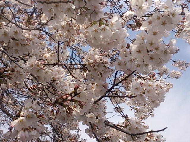 moblog_96aad5b7.jpg