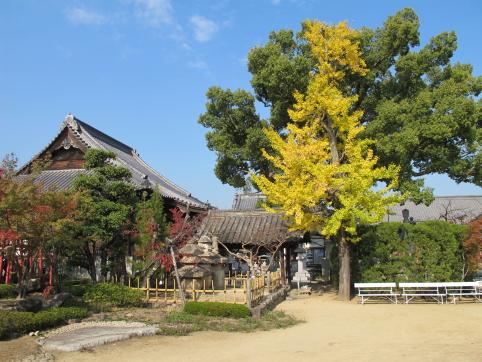 一宮寺の銀杏