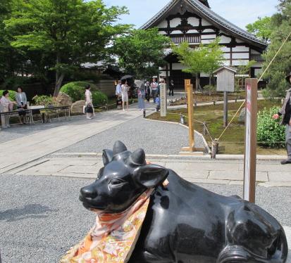 高台寺庫裡と牛