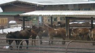 mule(ミュール)