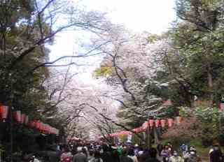 花見in上野公園