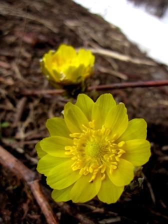 「幸福を招く」花