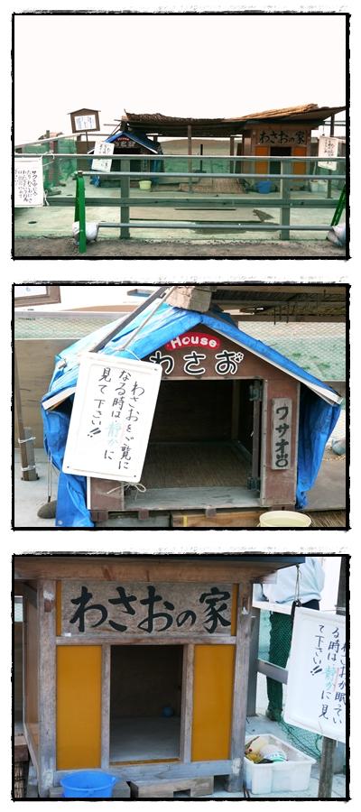 wasao house