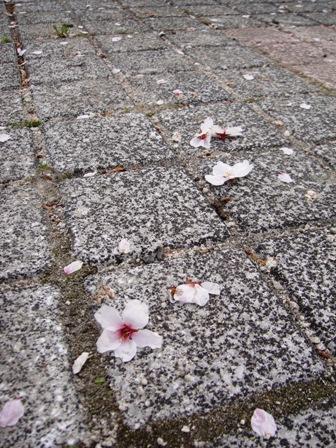 花が・・・