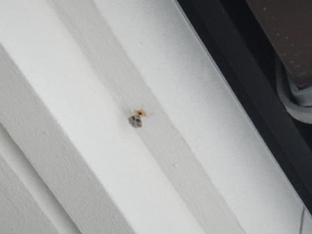 ハチの巣!