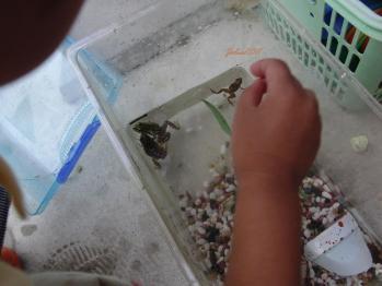 frog2011.jpg