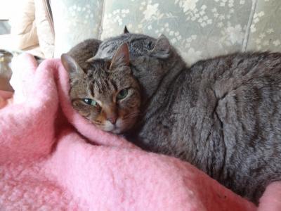 マリー&タンジー2